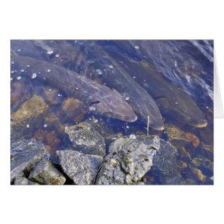 Cartão Esturjão do lago
