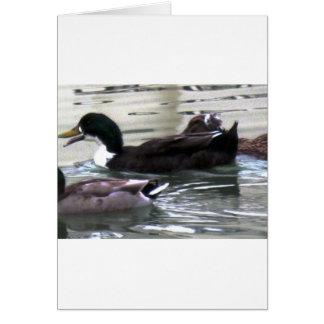 Cartão Eu amo patos