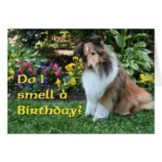 Cartão Eu cheiro um aniversário Sheltie