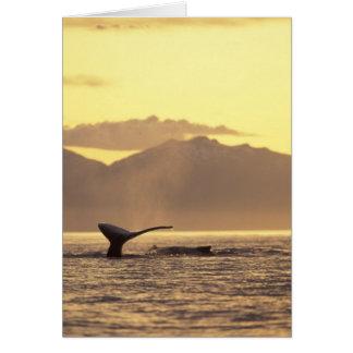 Cartão EUA, Alaska, baleia de Humpback interna da