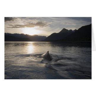 Cartão EUA, Alaska, parque nacional de baía de geleira,