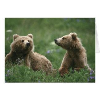 Cartão EUA, Alaska, ursos marrons do secundário-adulto do