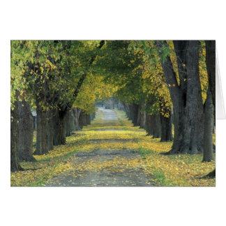 Cartão EUA, Kentucky, Louisville. estrada Árvore-alinhada