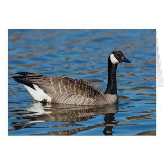Cartão EUA, Oregon, animais selvagens nacionais 7 de
