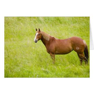 Cartão EUA, Washington, cavalo no campo do primavera, 2