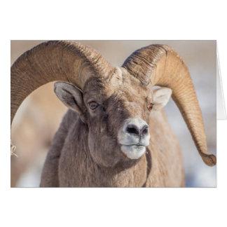 Cartão EUA, Wyoming, refúgio nacional dos alces, carneiro