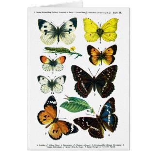 Cartão europeu da placa de borboletas II