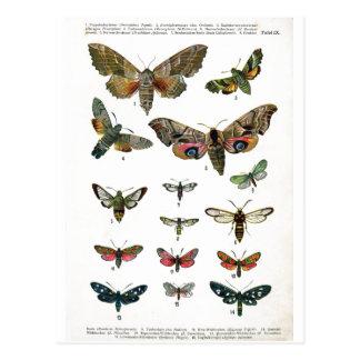 Cartão europeu das borboletas