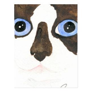 Cartão Eyed grande do gato do sapato de neve Cartão Postal