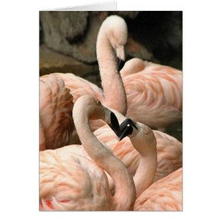 Cartão fabuloso dos flamingos