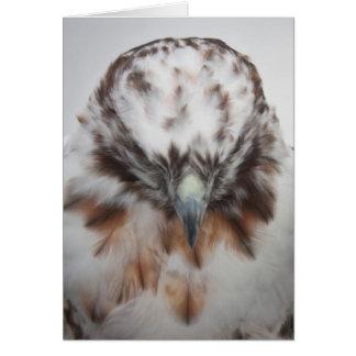 Cartão Falcão Vermelho-atado albino