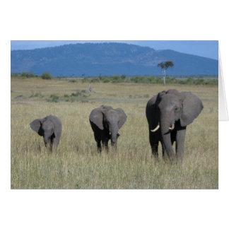 Cartão Família do elefante
