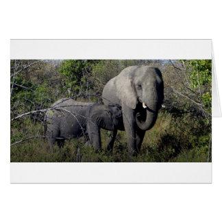 Cartão Família do elefante africano