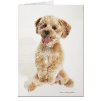 Cartão Familiaris do Canis