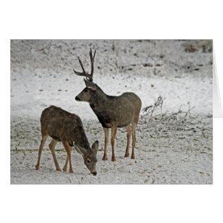 Cartão Fanfarrão e gama dos cervos de mula