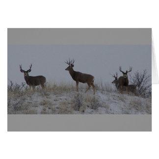 Cartão Fanfarrões dos cervos de mula D0021