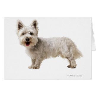 Cartão Feche acima de um terrier