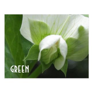 Cartão feito sob encomenda do modelo da flor da er cartão postal