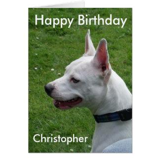 Cartão Feliz aniversario de Staffordshire bull terrier
