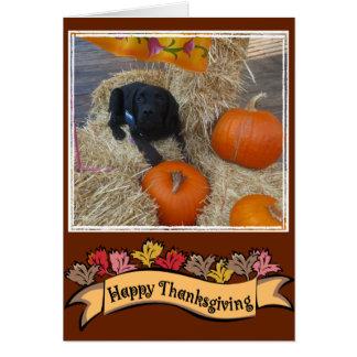 Cartão feliz da acção de graças