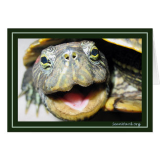 Cartão feliz da tartaruga