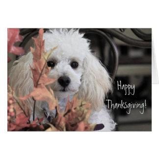Cartão feliz do cão de caniche da acção de graças