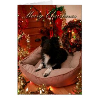Cartão Feliz Natal, collie, sheltie