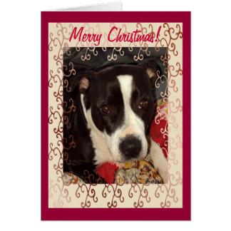 Cartão Feliz Natal de Staffordshire Terrier!