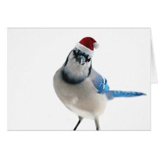 Cartão Feriado Jay azul