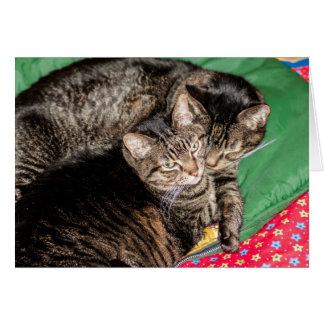 Cartão Feriados - Natal - diários - dois gatos