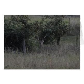Cartão Fileira dos cervos & da cerca do fanfarrão