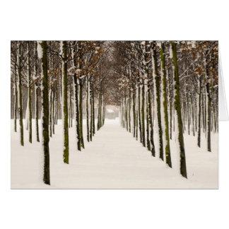 Cartão Fileiras das árvores