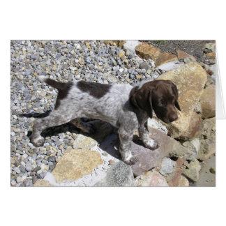 Cartão Filhote de cachorro alemão do ponteiro de cabelos