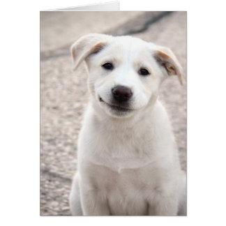 Cartão Filhote de cachorro amarelo do laboratório -