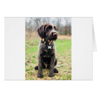 Cartão Filhote de cachorro apontar Griffon Wirehaired