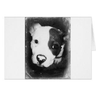 Cartão Filhote de cachorro azul de Pitbull do nariz