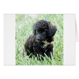 Cartão Filhote de cachorro da caniche de brinquedo