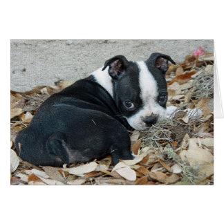 Cartão Filhote de cachorro de Boston Terrier