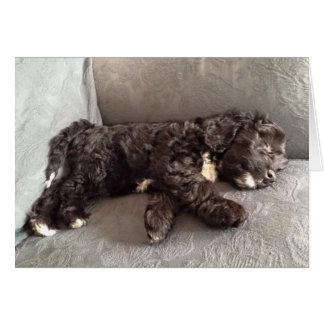 Cartão - filhote de cachorro de Cockapoo