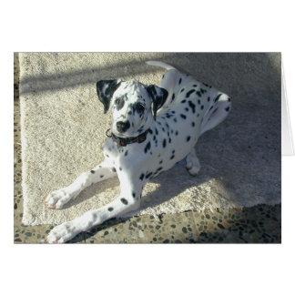 Cartão Filhote de cachorro de Dalmation