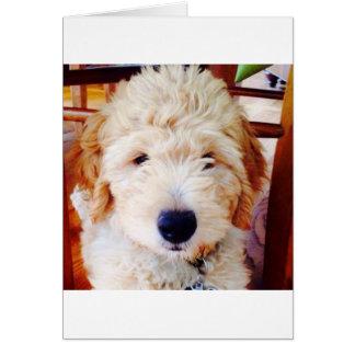 Cartão Filhote de cachorro de Goldendoodle