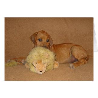 Cartão Filhote de cachorro de Rhodesian Ridgeback