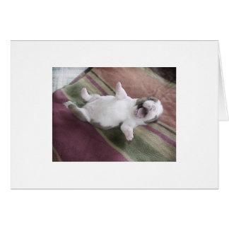 Cartão Filhote de cachorro de riso do buldogue