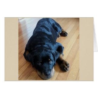 """Cartão Filhote de cachorro de Rottweiler """"eu sou sempre"""