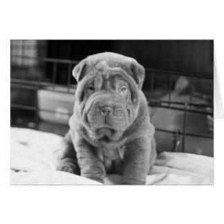 Cartão Filhote de cachorro de Sharpei