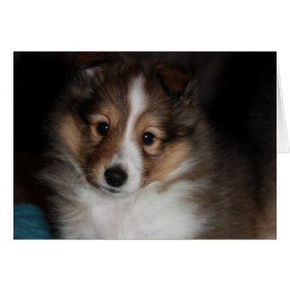 Cartão Filhote de cachorro de Sheltie