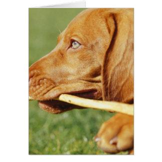 Cartão Filhote de cachorro de Vizsla no parque com a vara
