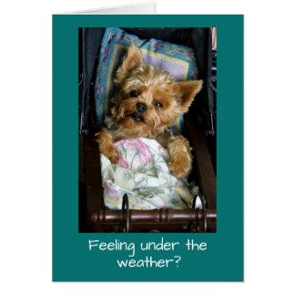 Cartão Filhote de cachorro de Yorkie na carruagem de bebê