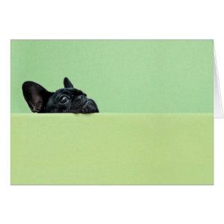 Cartão Filhote de cachorro do buldogue francês que