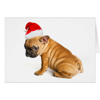 Cartão Filhote de cachorro do buldogue francês que veste